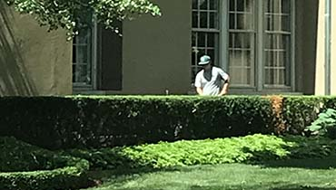 Bush Trimming