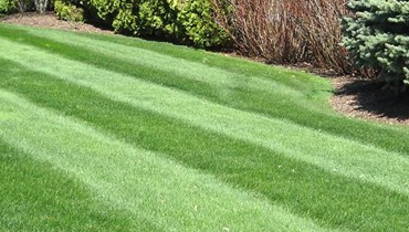 Lawn Care And Garden Maintenance