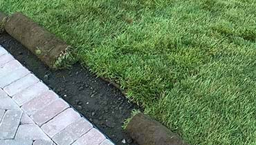 Grass sod installation and grass replacement services kentucky bluegrass sod