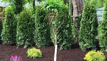 Tree Installation, Tree removal Shrubs & Garden